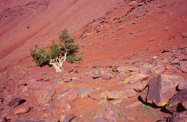 Trekking to Azib Tamsoult, High Atlas, Morocco, 2017