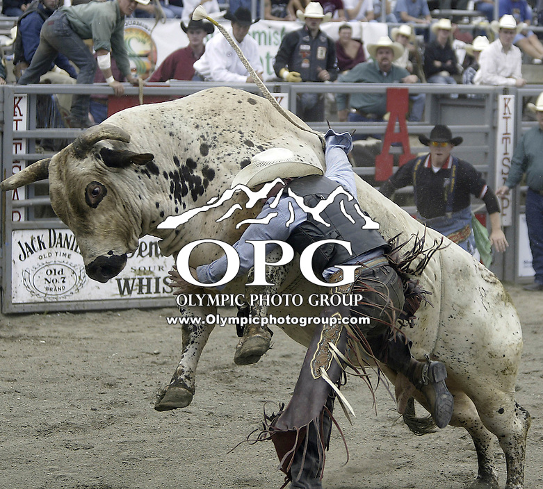 29 August 2004: Bull Rider Clayton Foltyn 10th ranked in the world tries to get free after riding the bull Broken Bones during the PRCA 2004 Extreme Bulls competition in Bremerton, WA.