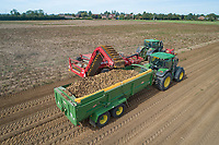Harvest potatoes - Lincolnshire, September