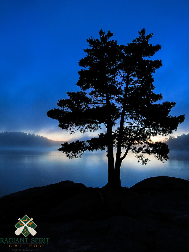 &quot;White Pine Tree Silhouette&quot;<br />