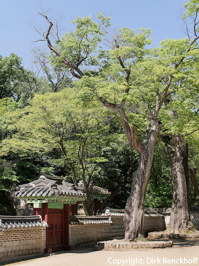 UIduhap im Secret Garden = Huwon= Biwon des Changdeokgung Palast, Seoul, S&uuml;dkorea, Asien, UNESCO-Weltkulturerbe<br /> Uiduhap   in the secret garden of  palace Changdeokgung,  Seoul, South Korea, Asia UNESCO world-heritage
