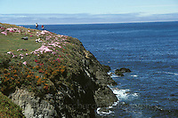 People walking on the headlands in the Mendocino Botanical Gardens, Fort Bragg California