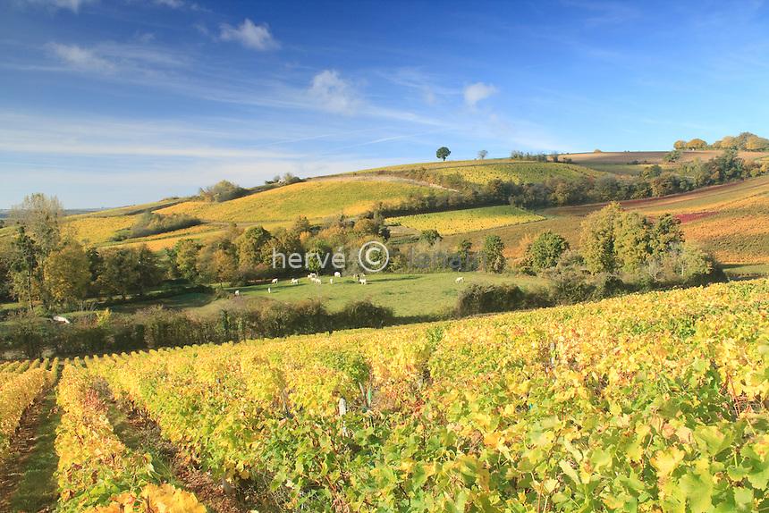 France, Cher (18), région du sancerrois, Reigny, vignoble en automne sancerre A.O.C., premier plan, vignoble vers le chemin du soleil, nom donné en raison de l'exposition plein sud et en amphithéatre de la pente // France, Cher, Sancerre region, Reigny, Sancerre vineyards in autumn, leading vineyards to the path of the sun, a name given because of the south-facing amphitheater and the slope