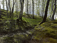 FOREST_LOCATION_90026