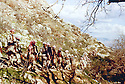 Iraq 1963 .Peshmergas walking on a lane in the mountains.Irak 1963.Peshmergas cheminant sur un sentier de montagne