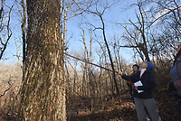 NWA Democrat-Gazette/FLIP PUTTHOFF<br />Eleanor Jones points out Feb. 17 2018 at large hickory tree.