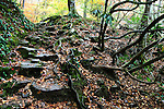 Stone Steps And Vines During Autumn In The Great Smoky Mountains National Park, Tennessee, USA