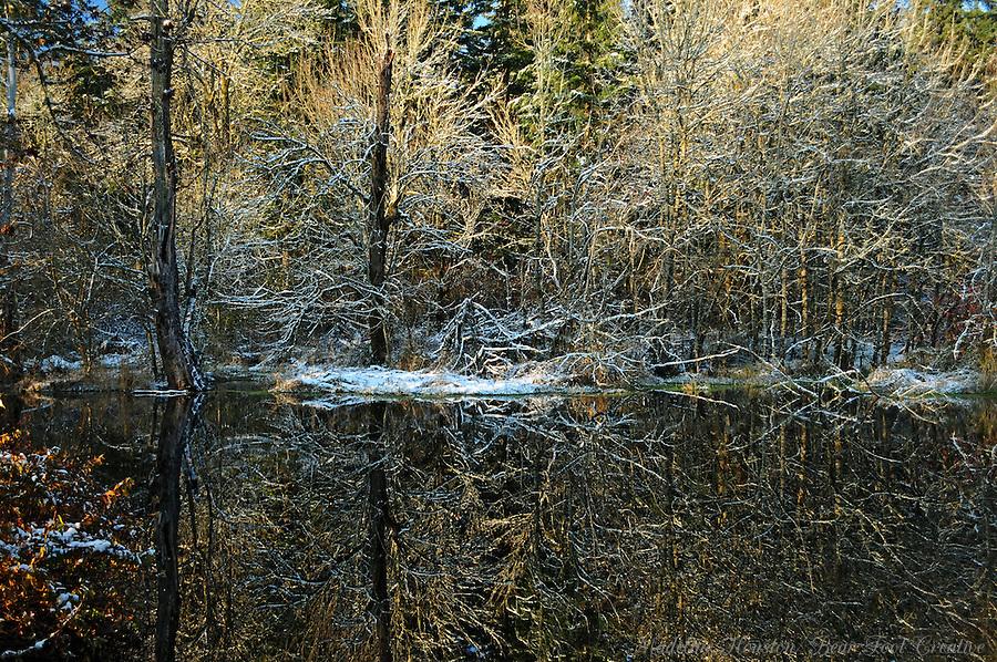 Winter scene at Scatter Creek Wildlife Area, Rochester, Washington