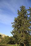 Israel, Elad overlooking Koach forest