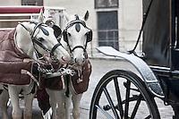 Europe/Autriche/Niederösterreich/Vienne: Les fiacres attendent devant la cathédrale Saint-Etienne: Stephansdom