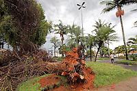 MOGI DAS CRUZES, SP, 06 JANEIRO 2012 - CHUVA DERRUBA ARVORE EM MOGI DAS CRUZES - Uma arvore caiu devido a forte chuva na Praca Bom Jesus, no centro da cidade de Mogi das Cruzes na grande Sao Paulo. (FOTO: WARLEY LEITE - NEWS FREE).