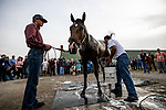 LOUISVILLE, KENTUCKY - APRIL 30: Omaha Beach gets a bath after preparations for the Kentucky Derby at Churchill Downs in Louisville, Kentucky on April 30, 2019. Evers/Eclipse Sportswire/CSM