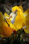 fairy child sitting in a flower