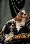 Cavalier King Charles Spaniel Shopping cart has 3 Tabs:<br />