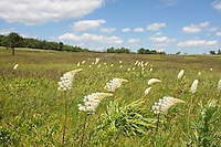 Big Meadow in the Shenandoah National Forest July 1, 2009 in Virginia. Photo/Andrew Shurtleff.