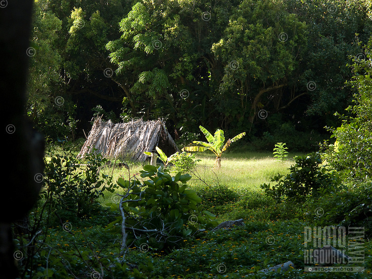 Native tent grass shack in Hawaii