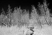 Wetland<br />Nestor Falls<br />Ontario<br />Canada