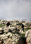 Israeli settlers from the Bracha settlement throw stones at Palestinian youth in the West Bank village of Burin on March 12, 2011 during clashes after an overnight attack in which five members of an Israeli family were killed at the Itamar settlement, officials and media reports said. Photo by Wagdi Eshtayah