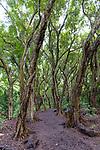 The woods at Honolua Bay, Maui, HI