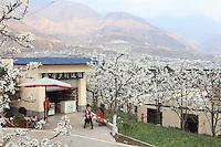 Touristes dans les vergers. Le week-end, Hanyuan connaît une grande influence touristique et les vergers sont visités par des milliers de personnes.///Hanyuan, Sichuan. Tourists in the orchards. On weekends, Hanyuan sees a big influx of tourists and the orchards are visited by thousands of people.
