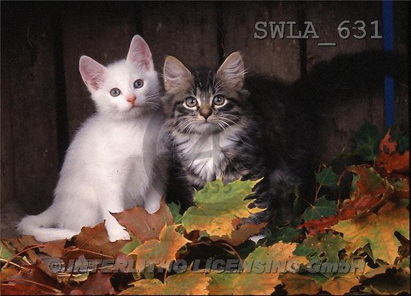 Carl, ANIMALS, photos, 2 cats, leaves(SWLA631,#A#) Katzen, gatos