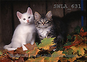 Carl, ANIMALS, photos, 2 cats, leaves(SWLA631,#A#) Katzen, gatos