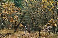 Couple walking<br /> McCloud River<br /> Shasta National Forest<br /> Cascade Range,  California