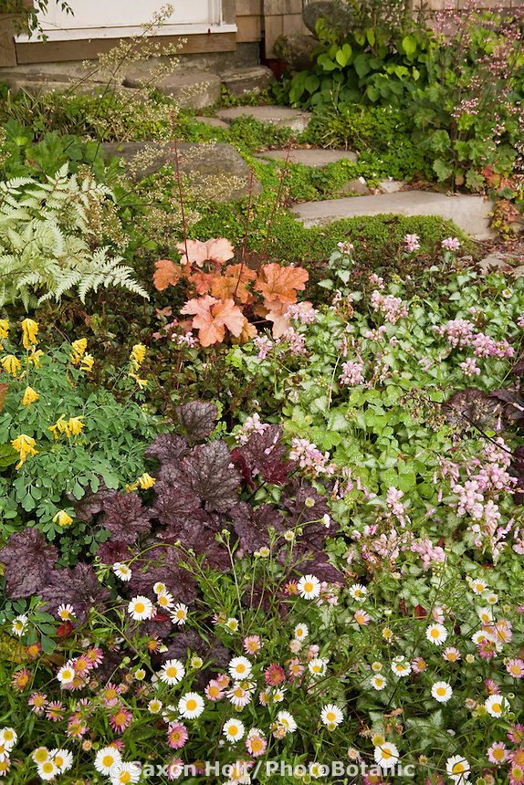 Groundcover perennial tapestry of Erigeron karvinskianus, Heuchera 'Plum Pudding', Corydalis lutea, Athyrium niponicum Pictum, Heuchera 'Dolce Creme Brulee', Lamium 'Pink Pewter' in Maile Arnold garden