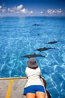 Hawaiian Spinner Dolphin, Stenella longirostris, pod with researcher inside Midway Atoll, Papahanaumokuakea Marine National Monumen, Northwestern Hawaiian Islands, USA. Pacific Ocean