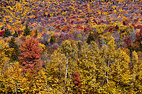Autumn forest detail, Stowe, Vermont, USA.