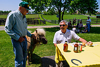 GEORGETOWN, KENTUCKY, MAY 06: Little Silver Charm meets Jack Knowlton, of Sackatoga Stables, at the14th Annual Fundraiser at Old Friends Farm on May 6, 2018 in Georetown, Kentucky. (Photo by Sue Kawczynski/Eclipse Sportswire/Getty Images)