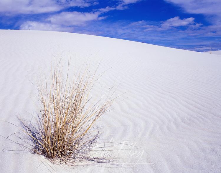 USA, New Mexico, White Sands NM, White Sand Dune