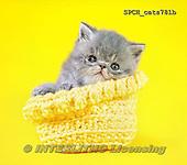 Xavier, ANIMALS, REALISTISCHE TIERE, ANIMALES REALISTICOS, cats, photos+++++,SPCHCATS781B,#a#