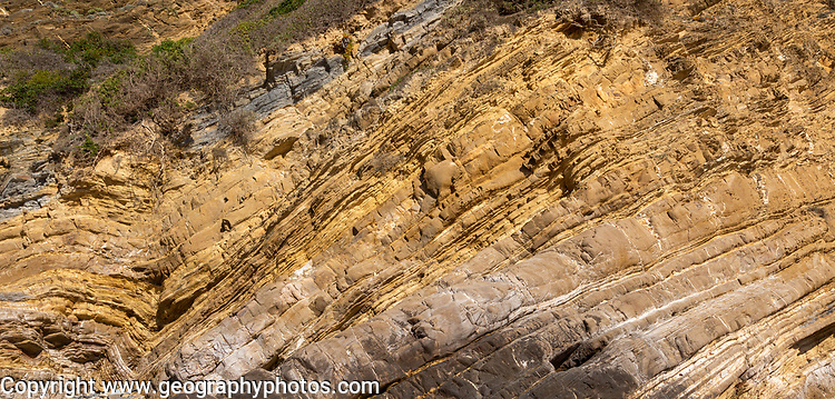 Strata of sandstone sedimentary rock in a coastal cliff with layers folded down to form a geological structure called a syncline, near Zambujeiro do Mar, Alentejo Littoral, Portugal, southern Europe. A syncline is a trough or fold of stratified rock in which the strata slope upwards from the axis. Folds typically form during crustal deformation as the result of compression that accompanies orogenic mountain building.