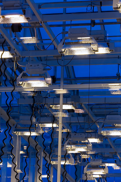September 9, 2014. Research Triangle Park, North Carolina.<br />  The light banks in the greenhouses produce 3 million watts of light and can mimic full day sun output and can also be controlled for each growing environment.<br /> The Syngenta Advanced Crop Lab is nearly one acre of advanced agricultural research under glass. The lab is capable of maintaining many different environments under its roof, allowing scientists to test the effects of various environmental elements on different crops and plants side by side.