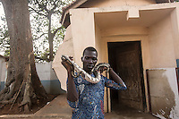 Benin - Ouidah - A local guide holds a pyton in his hands. Ouidah is the most important historical city in Benin and also the world's capital of voodoo. The city hosts the Temple of the Pytons, where the sacred serpents have been revered by the local population for centuries.