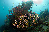 school of fusiliers at the japanese wreck in Amed.<br />