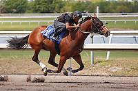 #107Fasig-Tipton Florida Sale,Under Tack Show. Palm Meadows Florida 03-23-2012 Arron Haggart/Eclipse Sportswire.