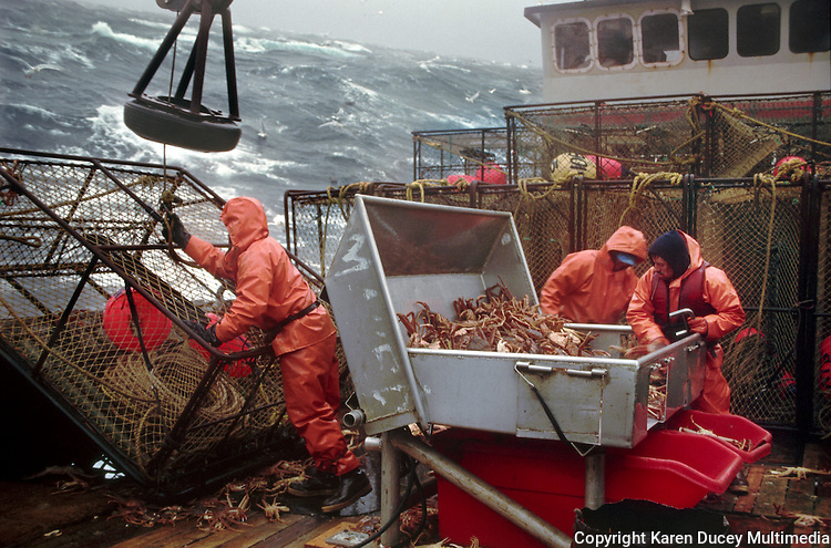 Crewmen sort opilio crab in the Bering Sea on board the F/V Maverick during a storm in 1993.