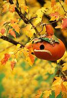 Gourd as a birdhouse