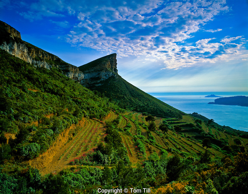 Lush mountain sides at Cassis  Provence, France  Mediterranean Sea  7th Century town near Calanques