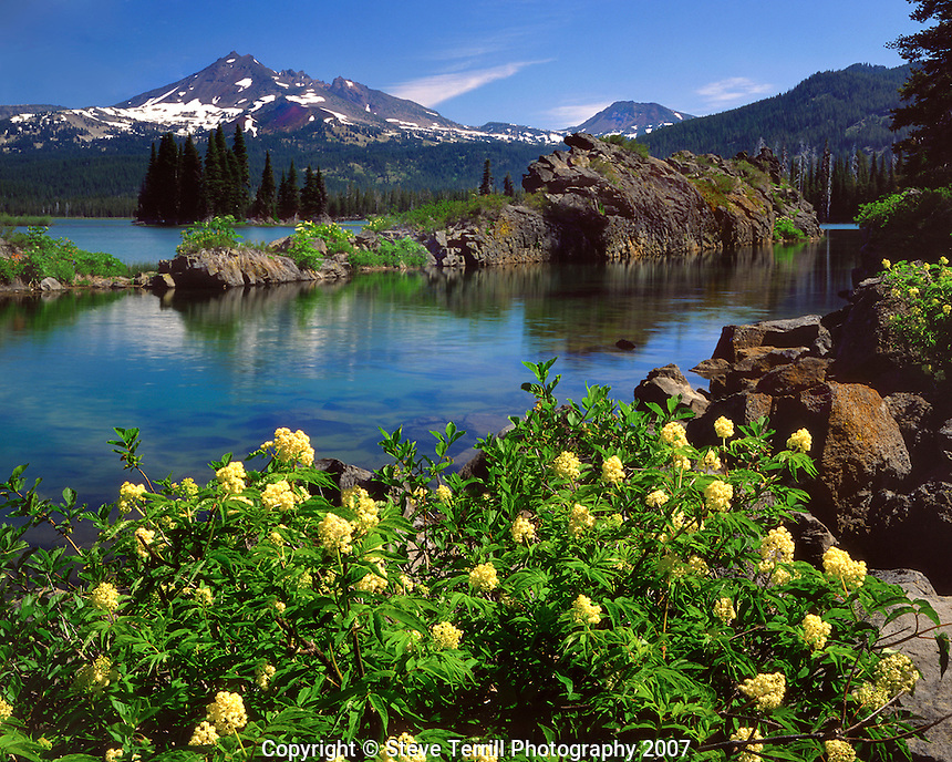 Elderberry flowers along Sparks Lake with Broken Top Mountain in distance in Deschutes National Forest, Oregon