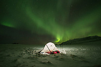 Northern lights shine over tent in winter, Vestvågøy, Lofoten Islands, Norway