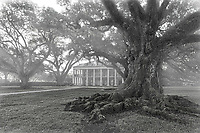 This is another capture of the mansion and oak trees right before the sun was fully up and before the mist lifted on this morning at the Oak Alley Plantation done in black and white.   This plantation is a popular spot for tourist looking for history and a feel for life long ago. The Oak Alley plantation was created in the early 1800's as a surgar cane plantation and was worked by slaves.  The plantation got it name from the many live oak trees that are over 300 years old prior to it existance.  Some refer to this area as Oak valley or Seven Oaks. Many movies has been made here especially if you are doing something releated to the deep south era or the confederate times along with many spooky movies.   The plantation is closest to the community of Vacherie, St James Parish Louisiana.  The plantation itself sits along the banks of the Missisippi river west bank.  Before the plantation was built these 300 year old trees had been planted here by someone but it is not known who.  Who ever put the trees down seem to know right where you would put the house as it lined up beautifuly with the house.  The Oak Alley Plantation is a National Historic Landmark as it is rich in history and is visited by many toursit.