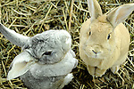 Buddha Bunnies! Bunny Photos. Marc Caryl Nature Photos.