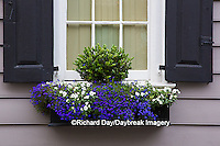 66512-00206 Window box with pansies and lobelias on house with black shutters. Charleston, SC