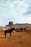 USA; Arizona; horses at the ranch of Roy Black near the entrance to Monument Valley Navajo Tribal Park