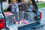 Susan Smith of Rivertown Cats and H.A.R.P. (Homeless Animal Response Program), of Antioch, California carries several humane traps, blankets, food and water for cats in her car, on Friday, March 21, 2014.  Photo/Victoria Sheridan