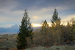 Idaho, Eastern, Driggs. Trees in the foothills of the Bighole Mountains in autumn with the Teton Range Distant.