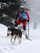 2nd February 2019, Thuringia, Frauenwald, Germany; Sled dog handler Andre Gch and his team are during a sled dog race. 120 mushers from five nations with their huskies, samoyeds, malamutes or Greenland dogs started.